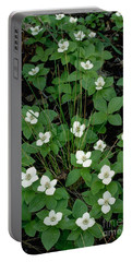 Portable Battery Charger featuring the photograph Dwarf Dogwood by Doug Herr
