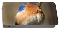 Eastern Bluebird Male Ruffled Portable Battery Charger