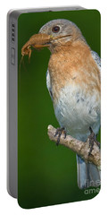 Portable Battery Charger featuring the photograph Eastern Bluebird With Katydid by Jerry Fornarotto