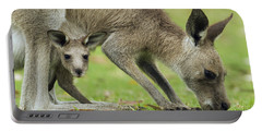 Eastern Grey Kangaroo Mother Grazing Portable Battery Charger