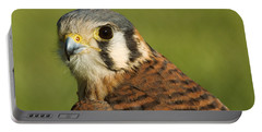 Portable Battery Charger featuring the photograph female American Kestrel by Doug Herr