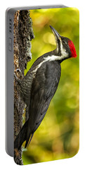 Female Pileated Woodpecker No. 2 Portable Battery Charger