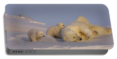 Female Polar Bear Cleans Her Coat Portable Battery Charger