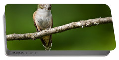 Portable Battery Charger featuring the photograph Female Rufous Hummingbird In A Tree by Jeff Goulden