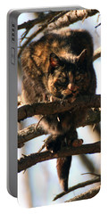 Feral Cat In Pine Tree Portable Battery Charger