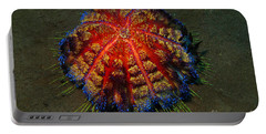 Portable Battery Charger featuring the photograph Fire Sea Urchin by Sergey Lukashin