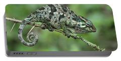 Flap-necked Chameleon Female Tanzania Portable Battery Charger