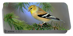 Goldfinch In A Fir Tree Portable Battery Charger by Rodney Campbell