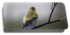 Portable Battery Charger featuring the photograph Goldfinch Molting To Breeding Colors by Susan Capuano