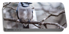 Gorgeous Blue Jay Portable Battery Charger by Cheryl Baxter