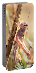 Grasshopper In The Marsh Portable Battery Charger