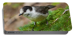 Gray Jay On Fir Tree Portable Battery Charger