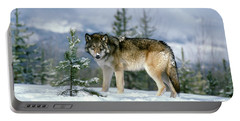 Gray Wolf Canis Lupus In Winter Snow Portable Battery Charger
