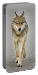 Gray Wolf Denali National Park Alaska Portable Battery Charger