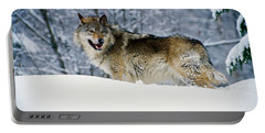 Gray Wolf In Snow, Montana, Usa Portable Battery Charger