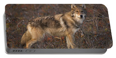 Gray Wolf On Tundra In Denali Portable Battery Charger