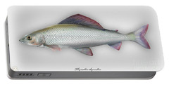 Grayling - Thymallus Thymallus - Ombre Commun - Harjus - Flyfishing - Trout Waters - Trout Creek Portable Battery Charger