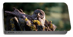 Great Gray Owl On Nest Portable Battery Charger