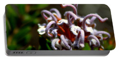 Portable Battery Charger featuring the photograph Great Spider Flower by Miroslava Jurcik