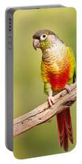 Green-cheeked Conure Pyrrhura Molinae Portable Battery Charger
