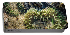Green Sea Anemone Portable Battery Charger by Linda Villers