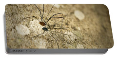 Portable Battery Charger featuring the photograph Harvestman Spider by Chevy Fleet