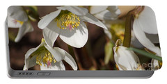 Helleborus Niger - Christrose Portable Battery Charger