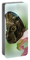 Portable Battery Charger featuring the photograph Hidden Beauty Of The Butterfly by Debbie Green