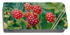 Highbush Blackberry Rubus Allegheniensis Grows Wild In Old Fields And At Roadsides Portable Battery Charger