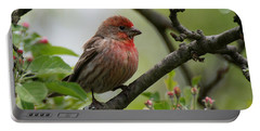 House Finch In Apple Tree Portable Battery Charger