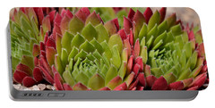 Houseleeks Aka Sempervivum From The Side Portable Battery Charger