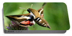 Hummingbird Moth From Behind Portable Battery Charger