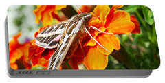 Hummingbird Moth On A Marigold Flower Portable Battery Charger