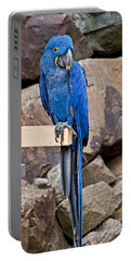 Hyacinth Macaw Parrot Bird Art Prints Portable Battery Charger