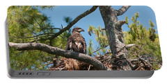 Immature Bald Eagle Portable Battery Charger