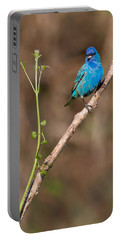 Indigo Bunting Portrait Portable Battery Charger by Bill Wakeley