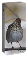 Portable Battery Charger featuring the photograph Inquisitive Hermit Thrush by Cascade Colors