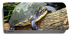 Portable Battery Charger featuring the photograph Just Chilling by Debra Forand