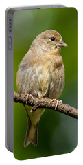 Juvenile American Goldfinch Portable Battery Charger
