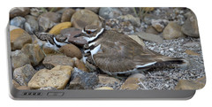 Killdeer And Young Portable Battery Charger