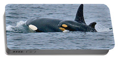 Portable Battery Charger featuring the photograph Killer Whale Mother And New Born Calf Orcas In Monterey Bay 2013 by California Views Mr Pat Hathaway Archives