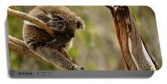 Koala Sleeping It Off In Australia Portable Battery Charger