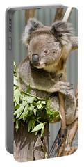 Koala Portable Battery Charger