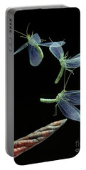 Lacewing Taking Off Portable Battery Charger