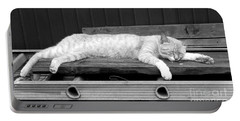 Portable Battery Charger featuring the photograph Lazy Cat by Andrea Anderegg