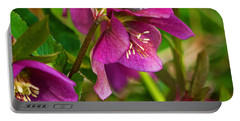 Portable Battery Charger featuring the photograph Lenten Rose by Jordan Blackstone