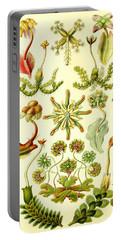 Liverworts Moss Brunnenlebermoos Haeckel Hepaticae Portable Battery Charger