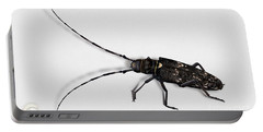 Long-hornded Wood Boring Beetle Monochamus Sartor - Coleoptere Monochame Tailleur - Portable Battery Charger