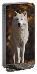 Portable Battery Charger featuring the photograph Look Out by Wolves Only