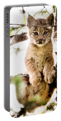 Lynx Kitten In Tree Portable Battery Charger